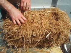 Several mushroom species are straw-inhabitants. You can use wheat-, rye- or barley straw. Garden Mushrooms, Growing Mushrooms, Mushroom Culture, Mushroom Species, Straw Bale Gardening, Mushroom Cultivation, Straw Bales, Drying Herbs, Propagation
