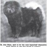 1911 Chmapion kan egyedüli import kutya kínából. Dog Evolution - Chow-Chow - Kutya Portál. Kutya Evolúció - Chow-Chow - Kutya Portál.