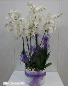 Tuzla Çiçekçi: Ürün Kodu : Orkide 2438  Beyaz Orkide : 6 Kök Yakl...