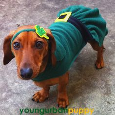 Win a Young Urban Puppy St Patrick's Day Leprechaun Costume ...