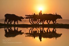 Slow life ( Myanmar) http://ift.tt/1PwaAJe AnimalAsiaBaganCarCartColor ImageCulturesFashionHorizontalMammalMandalayMode of TransportMotorMyanmarPassengerPhotographySoutheastTraditionTransportationVehicleWheelWorkinglakereflectionskysunsetwaterCart Horsedrawn