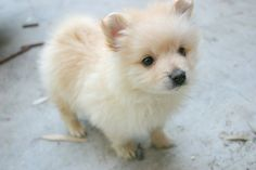 If my dog had a puppy it would look like this.