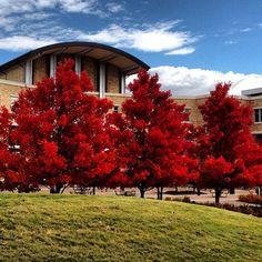 Beautiful Autumn Trees at Arkansas State University