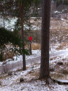 Love, heart, forest, trees By Malin Sköld
