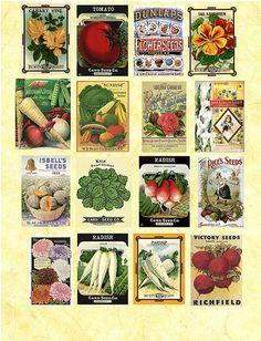 Seed Packets by PaperScraps, via Flickr - cute for a garden scrapbook