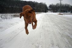 flying pooch