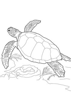 Free Printable Turtle Coloring Pages For Kids - Free Coloring Pages of Turtles - Ninja Turtle Coloring Pages, Animal Coloring Pages, Coloring Pages For Kids, Coloring Sheets, Cute Turtles, Baby Sea Turtles, Sea Turtle Art, Sea Turtle Painting, Turtle Quilt