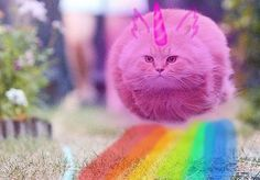 pink fluffy unicorns dancing on rainbows -'DDD - image #3722935 by ...