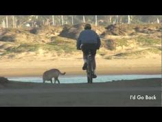 Dog with Man on Bicycle at Morro Bay, Ca, #Dogs #animals #beach #ocean #bikes