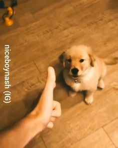 Funny Puppies, Funny Dogs, Cute Dogs, Cute Animal Photos, Cute Animal Videos, Cute Little Animals, Cute Funny Animals, Teddy Bear Puppies, Dog Games