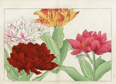 woodblock botanical prints by Tanigami Konan (1879-1928).  The work was to celebrate the seasons, so there are exuberant selections from all the seasons.  It is called Seiyo Soka Zofu, or a Pictorial Book of Western Flowers