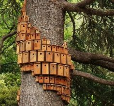 This just reminds me. Teach kids to make bird houses....put them all over on trees like this one.