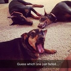 Funny Animals Of The Day - 21 Pics