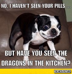 50 Hilarious (And Relatable) Dog Memes For National Dog Day - Funny Dog Quotes - Whoa. The post 50 Hilarious (And Relatable) Dog Memes For National Dog Day appeared first on Gag Dad. Funny Animal Jokes, Really Funny Memes, Stupid Funny Memes, Cute Funny Animals, Funny Relatable Memes, Funny Cute, The Funny, Funny Dogs, Funny Stuff