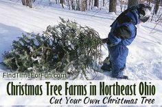 Christmas Tree Farms in Northeast Ohio