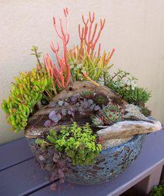 Ocean Inspired Succulent Garden. LaurasLittleGardens.com