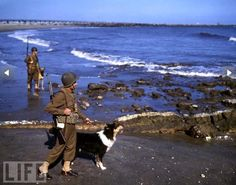 """Soldiers and their dogs patrol an L.A. beach in 1943. Some 19,000 dogs -- many of them domestic pets -- were """"drafted"""" for possible military use from 1942 to 1945. A little over half were enlisted into service."""