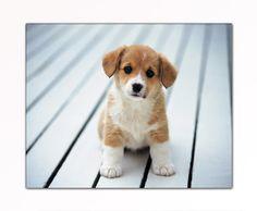 PREZZO SENSAZIONALE! Quadro su tela economico e moderno (Baby_Dog-40x50cm) Stampe artistiche incorniate. 34