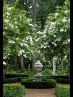 Formal Garden with Central Fountain, White Crepe Myrtles, and Reclaimed Red Brick Path.
