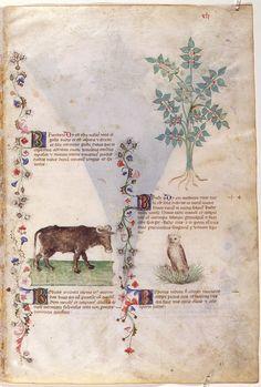 Sobre las plantas — Visor — Biblioteca Digital Mundial