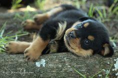 Rottweiler Puppies : MY BLOG : Jenni Ferreira