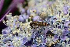 Pollen festivities... Photo by Paul Martens -- National Geographic Your Shot