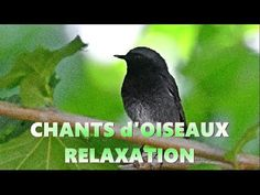 Meditation Music, Affirmations, Nature, Youtube, Animals, Wings, Health, Pretty Birds, Calming Music