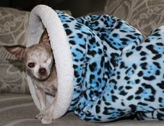Through April 5th PetPizzaz will donate 15% of every purchase to National Mill Dog Rescue. They make great beds like mine which is pictured here! www.petpizzaz.com