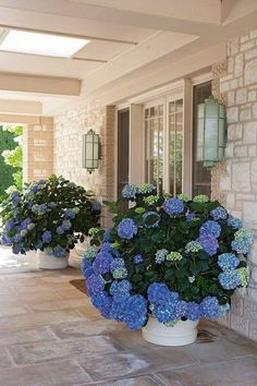 beautiful porches porch with hydrangeas