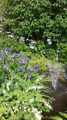 Valkoinen perennapenkki, ripaus lilaa. Suihkulähde pulputtaa....