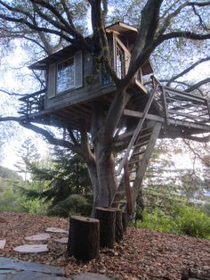 Tiny tree house bed & breakfast in SF Bay Area