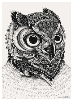 Iain Macaurthur illustration