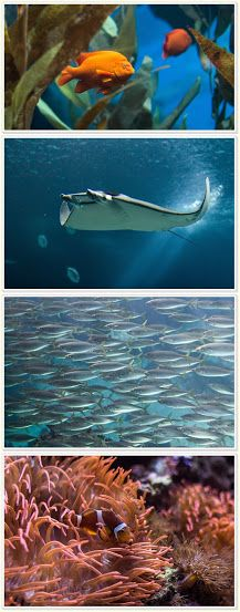Lojas de aquarismo online dating