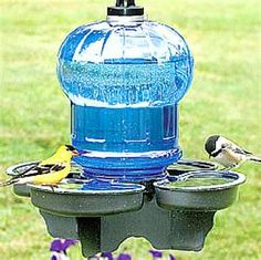 Gossiping around the water cooler!  IT LOOKS LIKE MANY ANIMALS CAN COME BY !