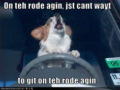 Funny pictures and memes of dogs doing and implying things. If you thought you couldn't possible love dogs anymore, this might prove you wrong. Corgi Cartoon, Corgi Funny, Corgi Dog, Funny Dogs, Dog Cat, Funny Animals With Captions, Cute Funny Animals, Corgi Pictures, Funny Pictures