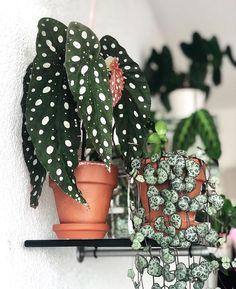 House Plants Decor, Plant Decor, Garden Plants, Decoration Cactus, Decoration Plante, Inside Plants, Cool Plants, Cool Indoor Plants, Indoor Flowering Plants