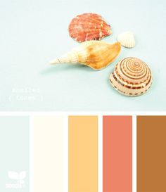 shelled tones -- guest room (already light blue bath and hints of brown -- would be great to tie in coral/orange