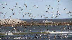 Viento y gaviotas - Playa Unión Rawson Chubut Argentina.-