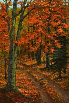 Frank Wilson – Maple Forest – new oils http://fineartamerica.com/featured/maple-forest-frank-wilson.html