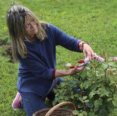 A The Body Shop saját rózsáit termeszti 100%-ban ökológiai módszerekkel. - British Rose termékcsalád