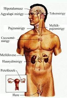 Pineal Gland, Third Eye, Human Body, Reiki, Therapy, Science, Health, Study, Tai Chi Exercise