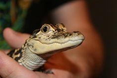 iHerp : Member Blog : Cute Baby Snakes!!