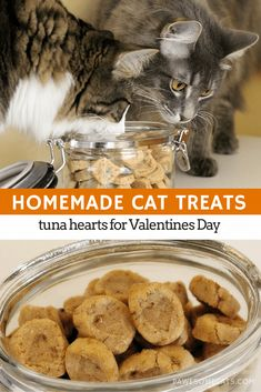 Tuna flavoured cat treats are easy to make with just a few simple ingredients. T… Tuna flavoured cat treats are easy to make with just a few simple ingredients. The purrfect Valentines Day gift for your cat. Cat Recipes, Dog Food Recipes, Catsu The Cat, Homemade Cat Food, Pet Treats, Healthy Cat Treats, Kitten Treats, Happy Healthy, Cat Health