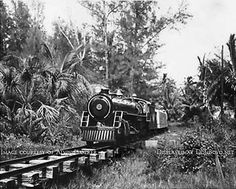 Old Miami Images 1960s | 1950's/1960's - the Crandon Park Train chugging through the wilderness ...