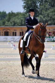 The great Lusitano stallion Spartacus  Coudelaria Santa Margarida #horses