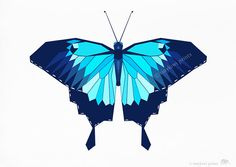 Butterfly, Ulysses Swallowtail, Blue butterfly, Geometric prints, Original illustrations, Insect prints, Minimal art