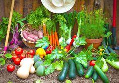 13 Veggies that Grow Insanely Fast – Gardening Steps
