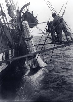 After the whale was killed, it was towed back the ship and lashed against the side while a man was lowered on a rope and he would use a blade to start slicing the blubber so the whale could be flensed. Here, a sperm whale is being lashed. Old Pictures, Old Photos, Nautical Pictures, Bateau Pirate, Old Sailing Ships, Foto Transfer, Wale, Maritime Museum, Foto Art
