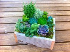 succulents in cigar boxes | simple wedding centerpieces for a handcrafted wedding green purple in ...