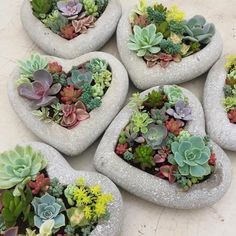 Que seu final de sexta-feira seja ótimo! Regrann from We are so excited Come visit us at Square One Shopping Centre (near Holt Renfrew) tomorrow Friday Saturday and Sunday to pick up a unique Mother's Day gift.Hebel blocks - How cute are these succ Succulent Arrangements, Cacti And Succulents, Planting Succulents, Planting Flowers, Succulent Landscaping, Succulent Gardening, Container Gardening, Succulent Planters, Gardening Books